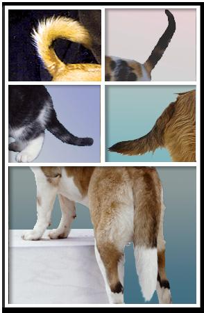 animal tails reiki paws